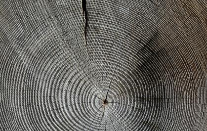 wood-618673_1920.jpg