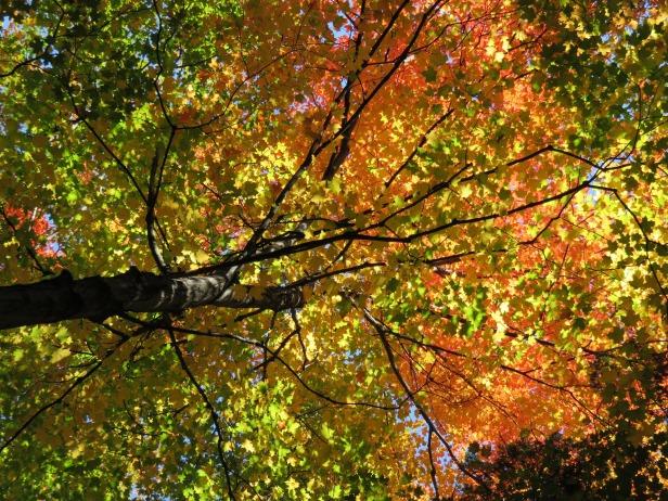 fall-1021535_1920