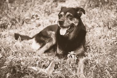 dog-1231089_1920